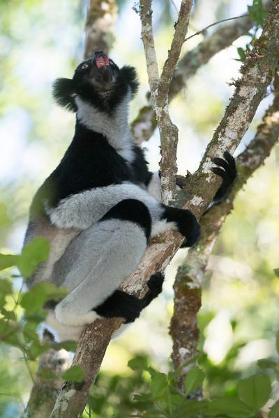 Madagascar_2013_FH0T9317.jpg