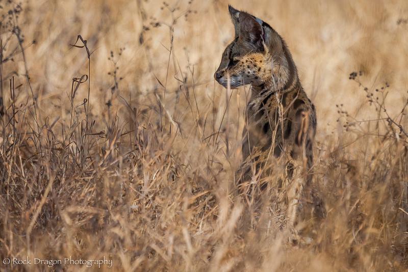 South_Serengeti-26.jpg