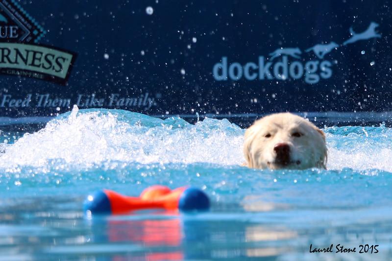 2015.8.5 Winnebago County Fair Dock Dogs (28).JPG