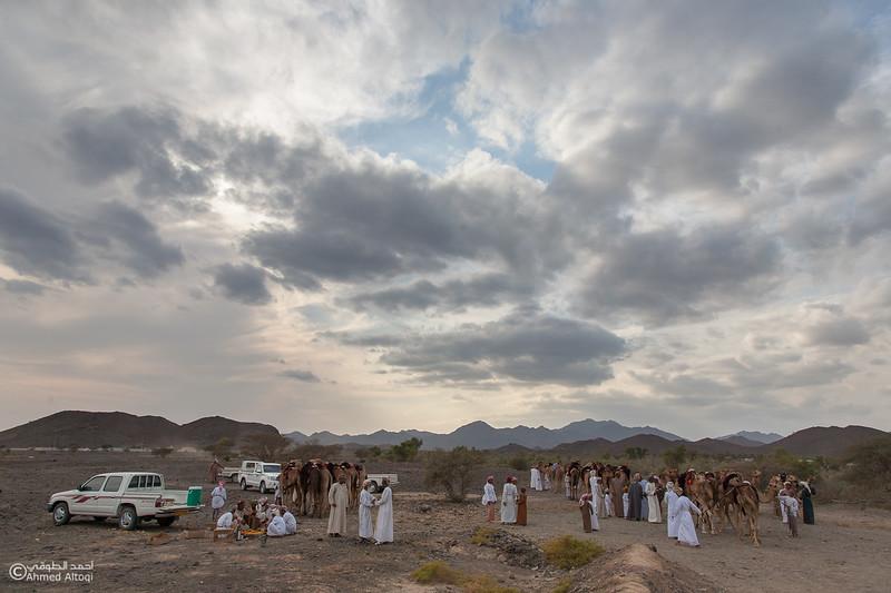 Camel Race  (10).jpg