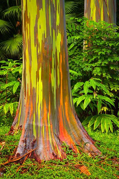 2013-02-07_Maui_Canon7D_2-4.jpg