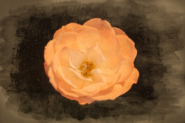 February 5 - Painted rose.jpg