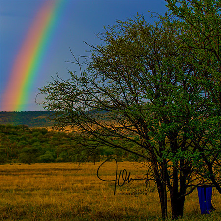 Rainbow Over Serengeti