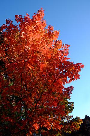 Fall in Menlo 2016