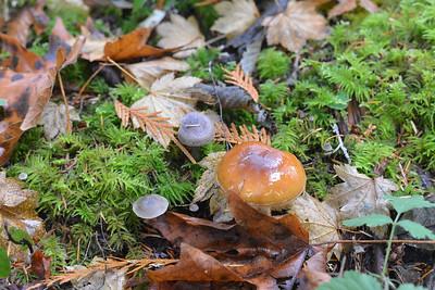 Breitenbusch mushrooms