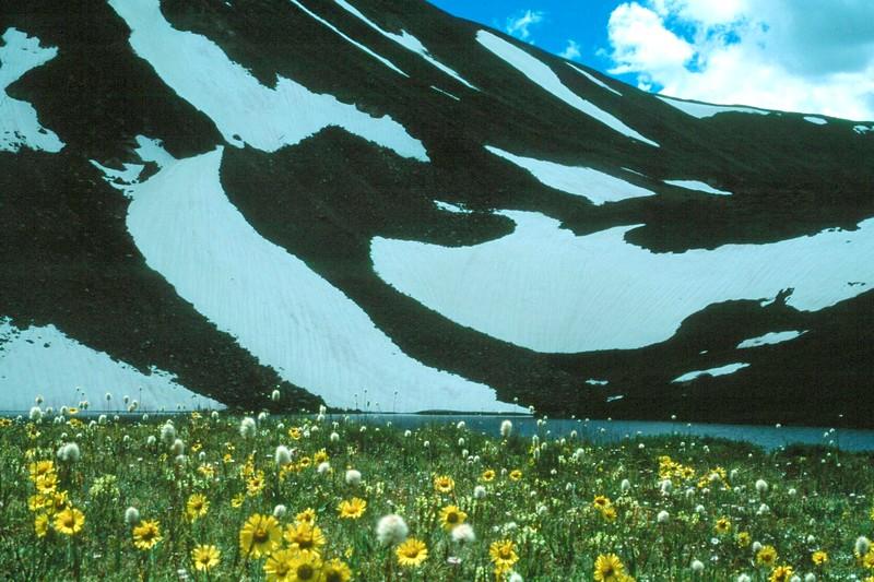 amh FLOWERS (1129).jpg