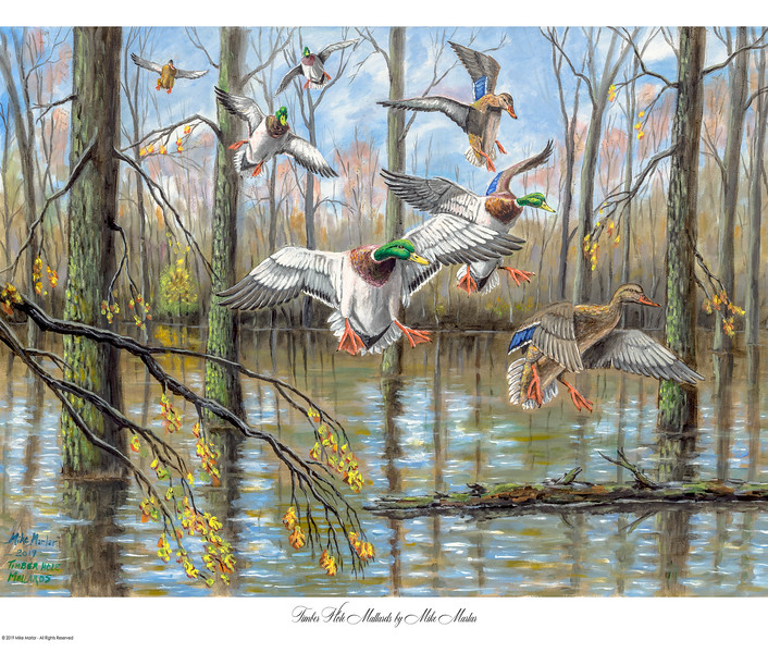 Mallards in the Timber - 2019 Arkansas Duck Stamp