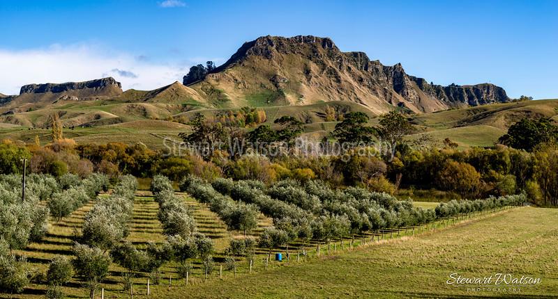 Vineyards at the foot of Te Mata Peak in Hawke's Bay
