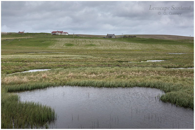 Funzie marshes, Fetlar