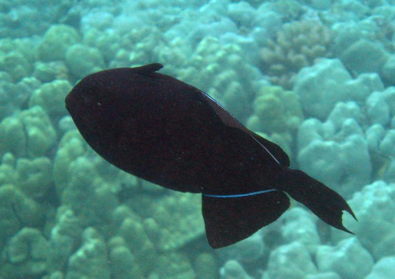 482- 20080416- Hawaii 20-Snorkelling IMG_0701.jpg