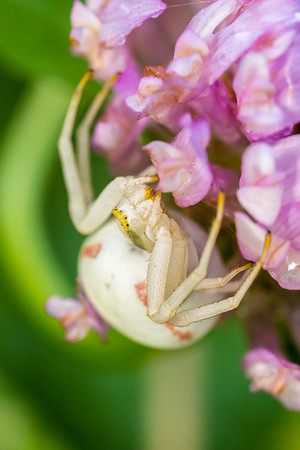 Spiders, Ants & Aphids