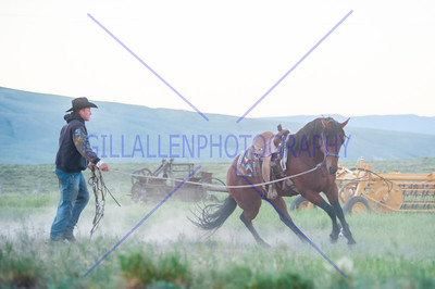 CattleDrive 130627