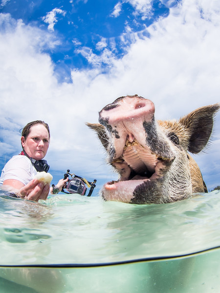 Swimming Pigs- Staniel Caye-165.jpg