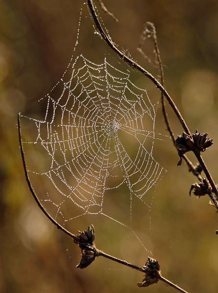 dewdrops-terim_9_20141019_1232605394.jpg