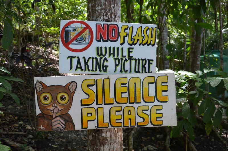 DSC_7114-loboc-tarsier-conservation.JPG