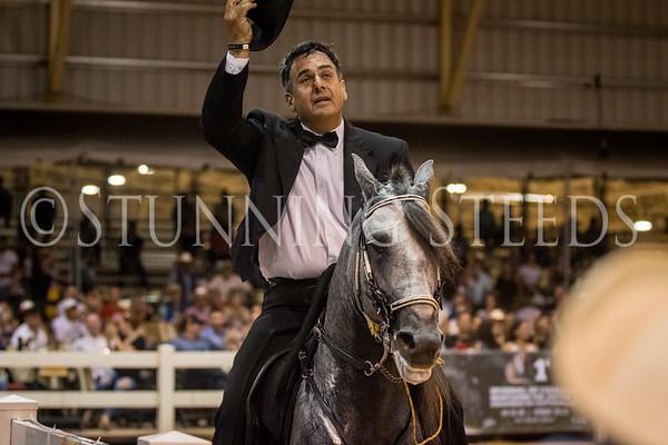 290-Fino Stallions 5 & 6 Years