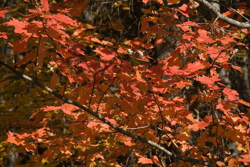 leaves_6305.jpg