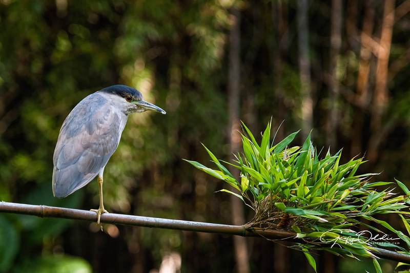 heron_on_a_branch.jpg