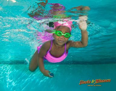 11-2015 Shark Pool