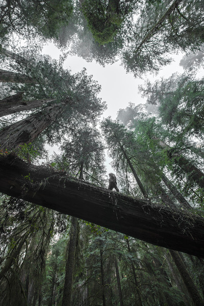 Landscape Photography in Jedediah Smith Redwoods State Park