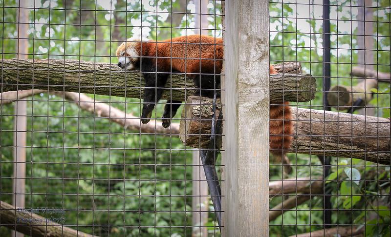 2016-07-17 Fort Wayne Zoo 703LR.jpg