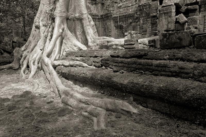 Ta Nei temple, Angkor Thom