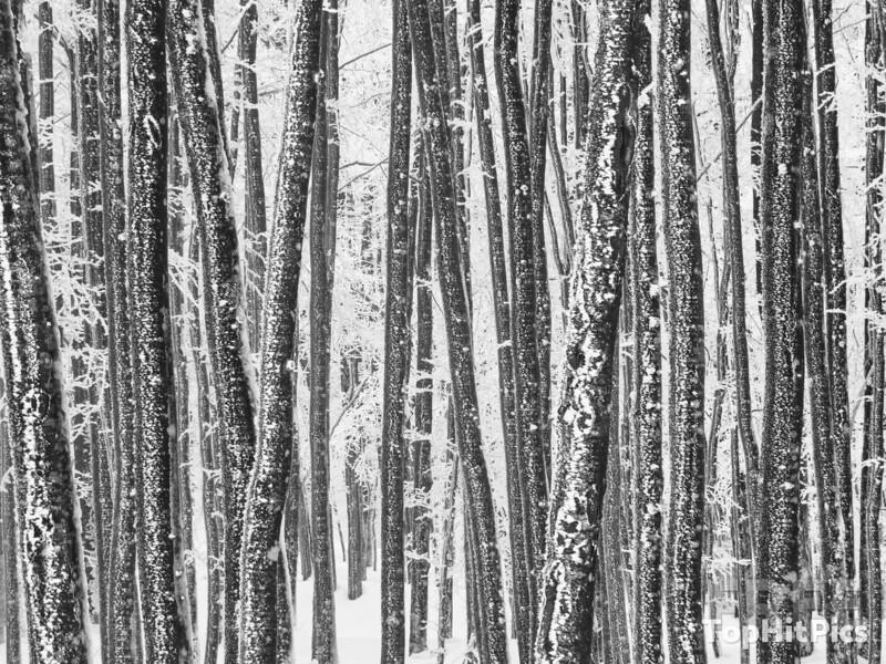 Snowy Scenes on Monte Amiata in Tuscany, Italy
