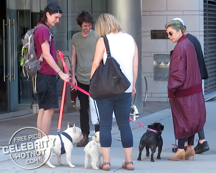 Lady Gaga Pets Her French Bulldogs With Dogwalker, Vancouver