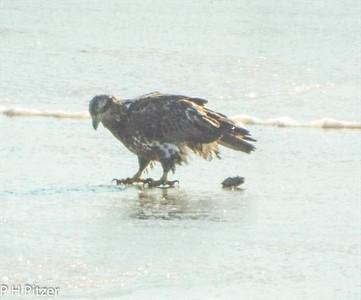 Eagle-01 DEC 2014