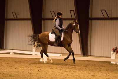 Horse 632