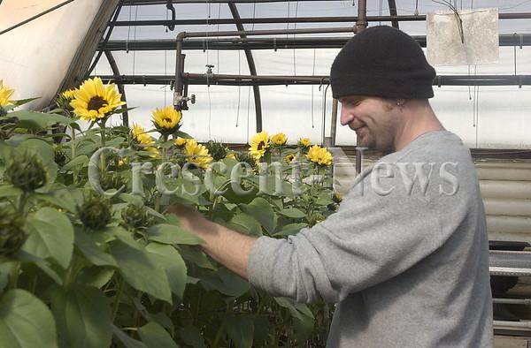 03-26-14 NEWS Sunflowers