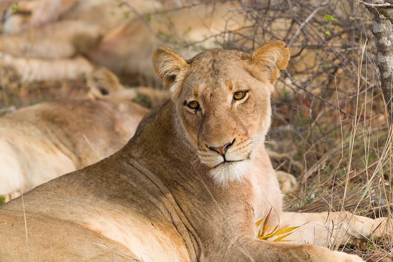 Safari-0330.jpg