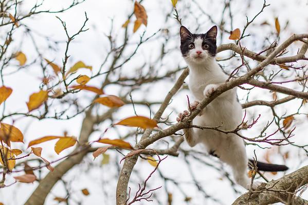 2020 Nov   Kittens' first walk outside