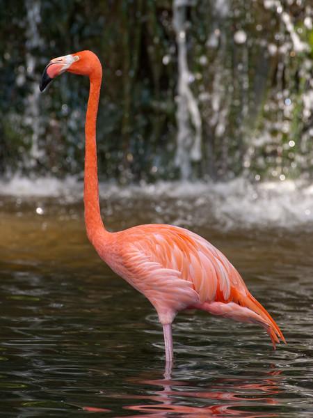 310-Flamingo.JPG
