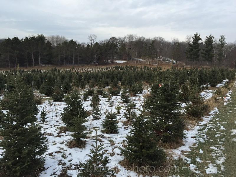 Santa's Evergreens