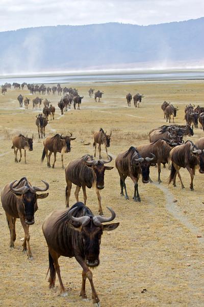 Ngorongoro 6.jpg