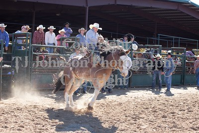 Sunday Afternoon Bucking