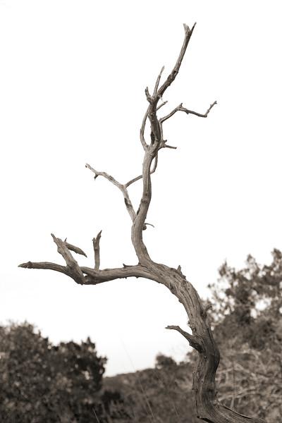 2008-11-22 Wood Study 3811.jpg