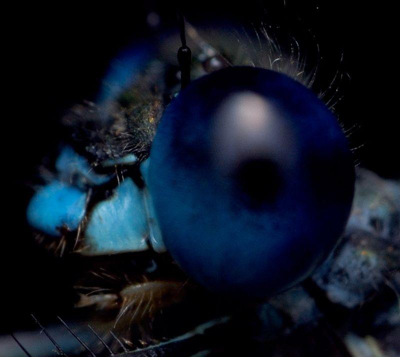 eyeballcrop5.jpg