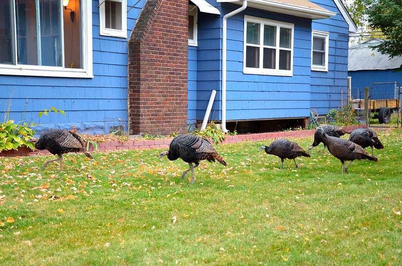 Turkey's In MPLS_035.JPG