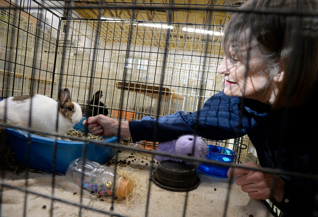 The Colorado House Rabbit Society in Broomfield rescues and finds homes for bunnies.