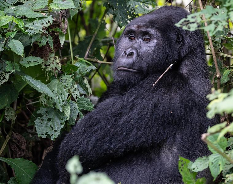 Uganda_T_Gor-2329.jpg