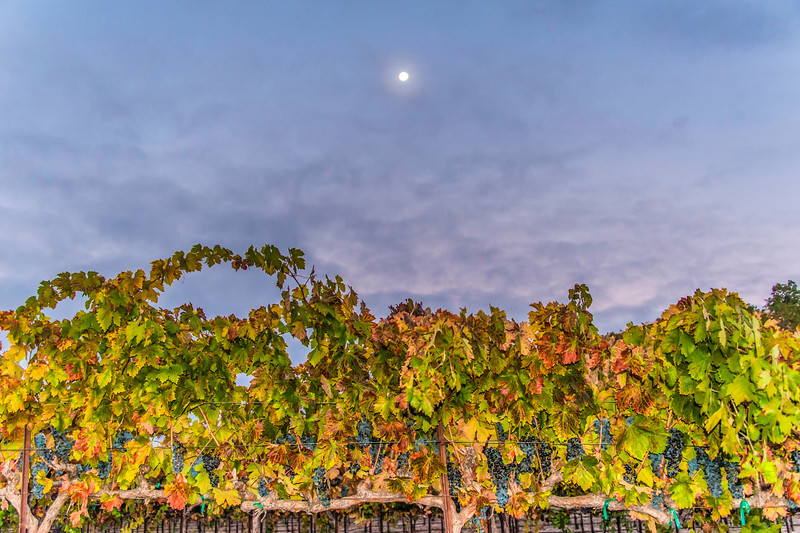 Paso Vineyards-1.jpg