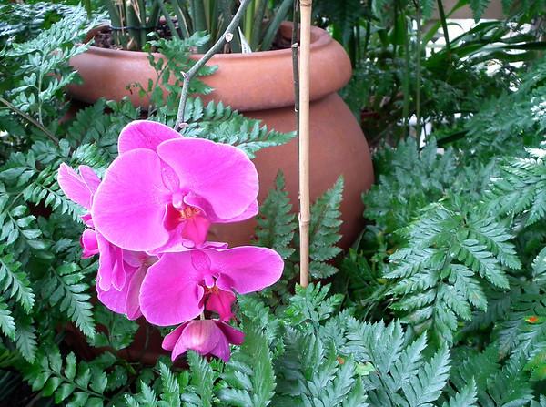 Athens, GA - State Botanical Garden of Georgia