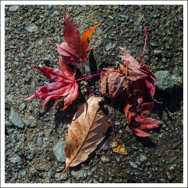 Leaves in the parking lot.