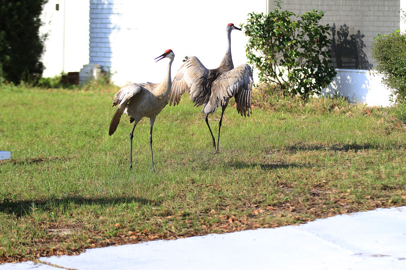 cranes-3-4-19-meh_4848.jpg