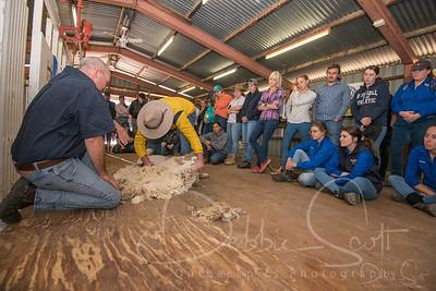 Shearing at LPC