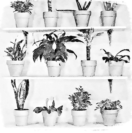 Plants, Leaves and Trees Wall Art