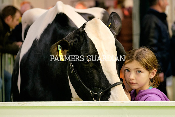 Royal Ulster Winter Fair 2018