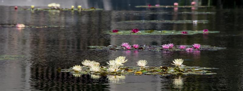 Balboa Park Flowers-1262.jpg